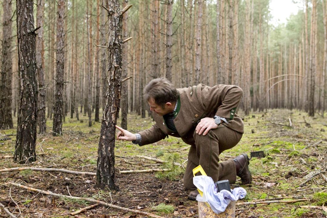 Sauen Wildschwein Jagd Jägermagazin hunting wildboar Wildschaden vermeiden - Das perfekte Revier von Hubert Witt
