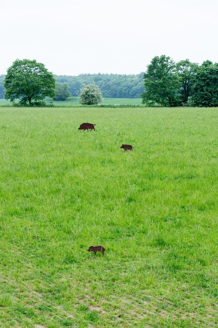 Entfernung schätzen Sauen Wildschwein Jagd Jägermagazin hunting wildboar