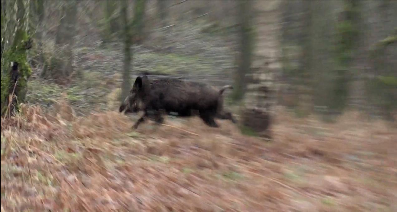 Drückjagd in der Heimat Teil 3 - JÄGER Prime - Jagdvideos in FullHD