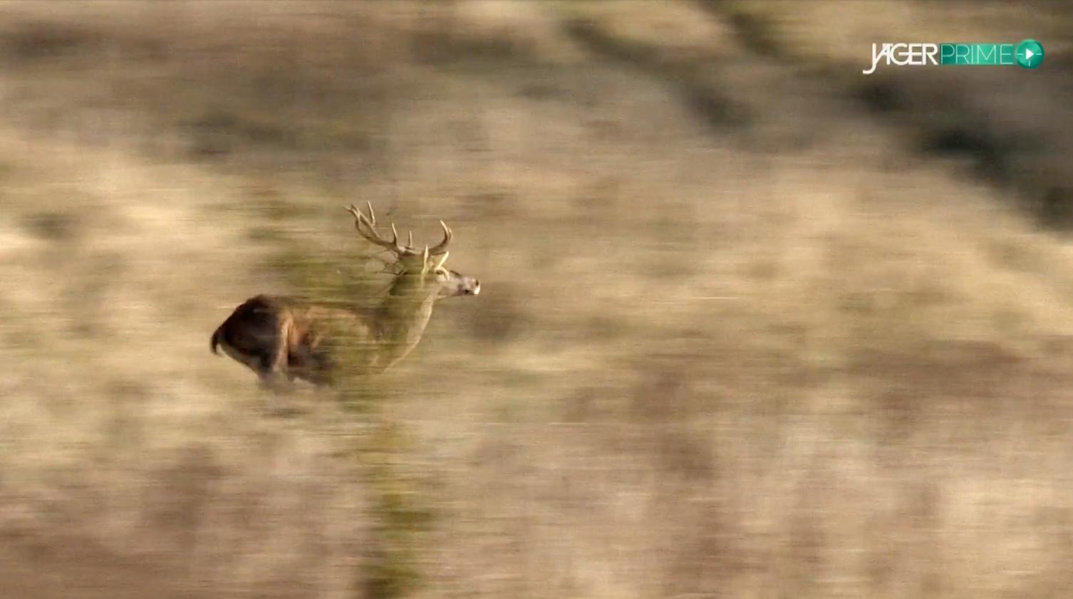 Drückjagd in der Heimat Teil 1 - JÄGER Prime - Jagdvideos in FullHD