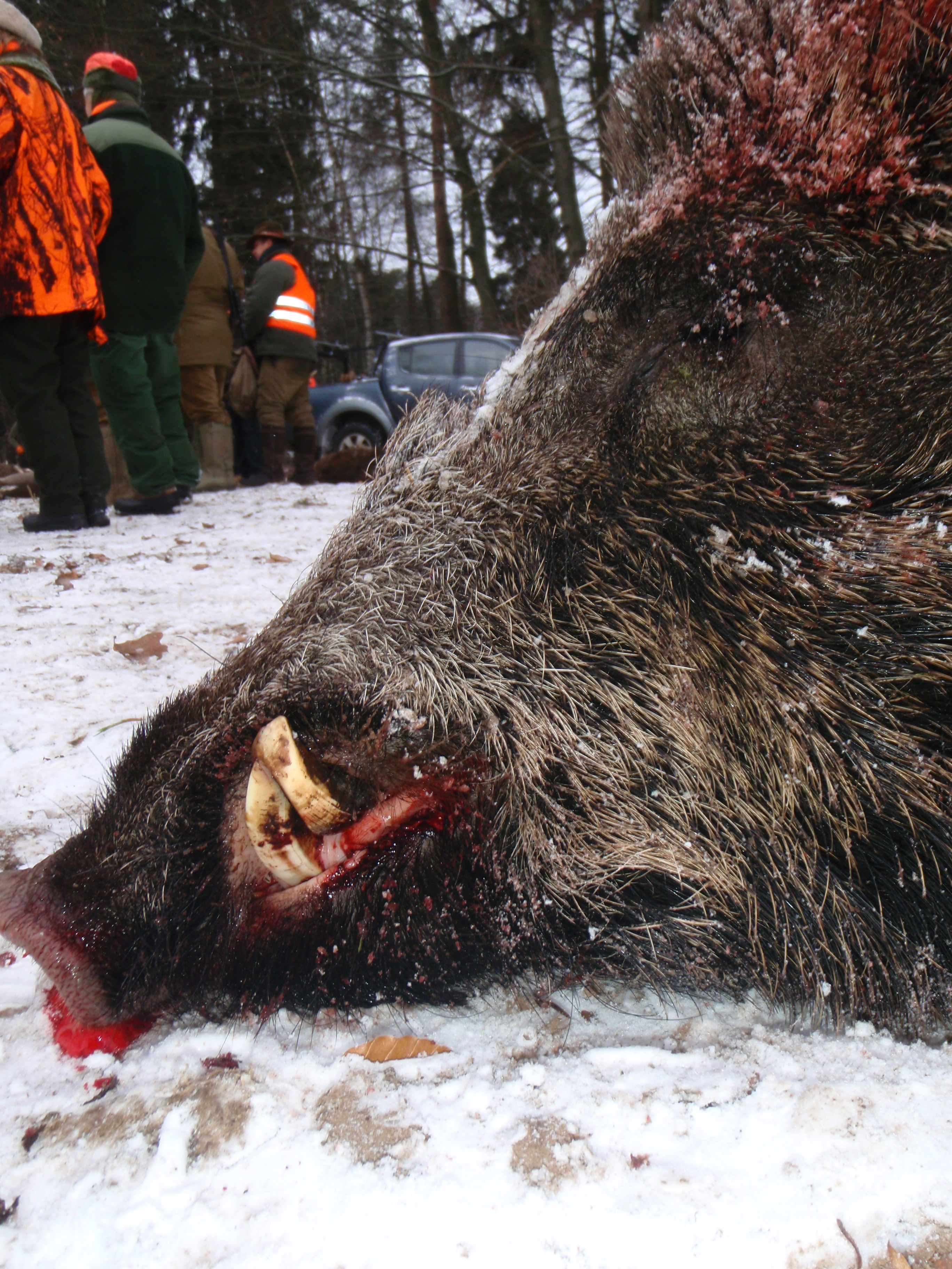 Deutsche Jäger erlegen über 820.000 Wildschweine